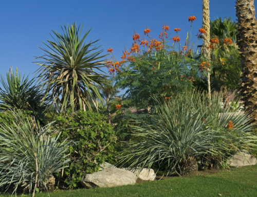 How To Plant An Outdoor Succulent Garden