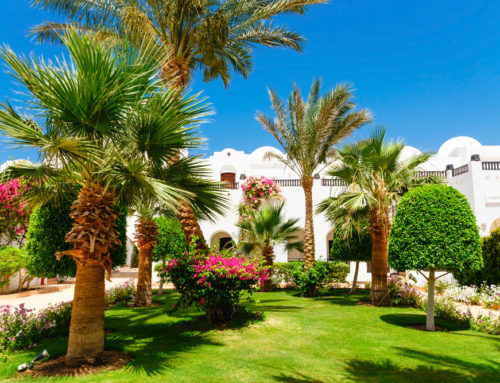 The most popular Palm trees